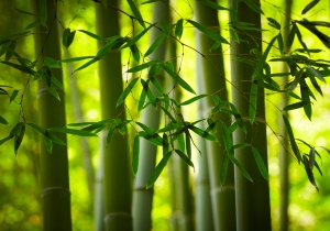 Innovation...in the bamboo forest?