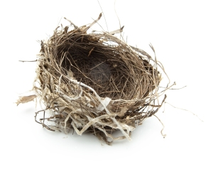 Picture of an empty bird's nest